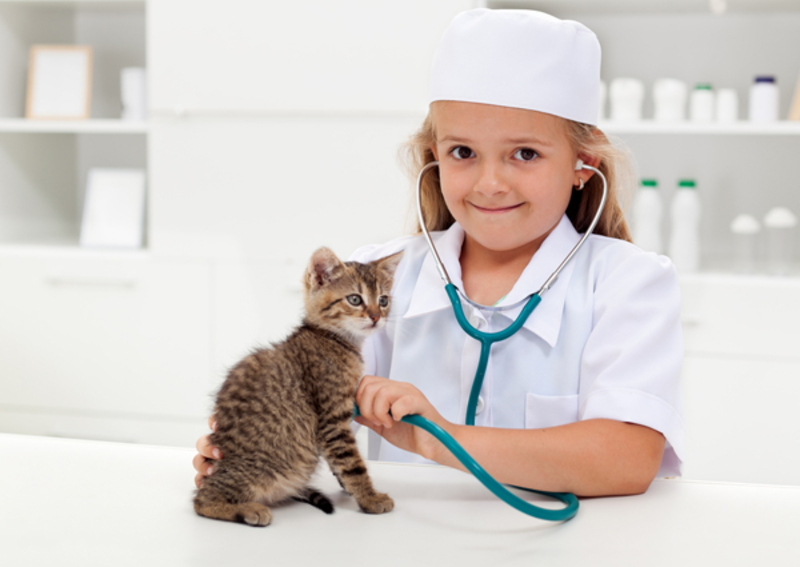 A child using a stethoscope on a cat