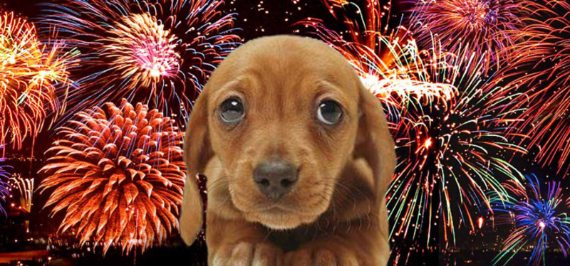 A small puppy with fireworks in the background