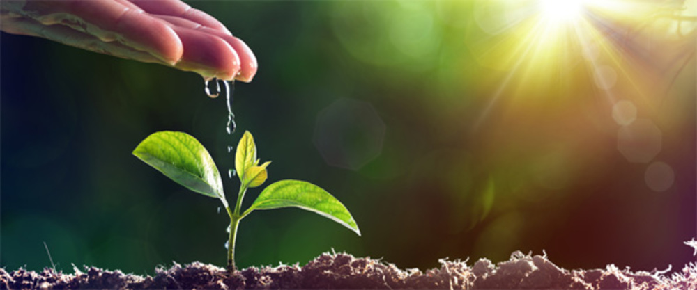 Hand dripping water onto seedling with sunlight from the right