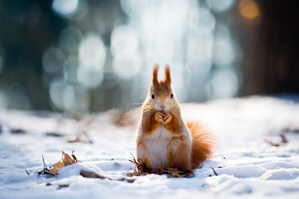 Novate IT - IT & Digital Media Recruitment Consultancy Bristol Nottingham UK Europe - Adorable Squirrel