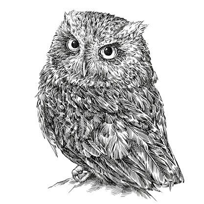 IR35 Are You a Wise Owl