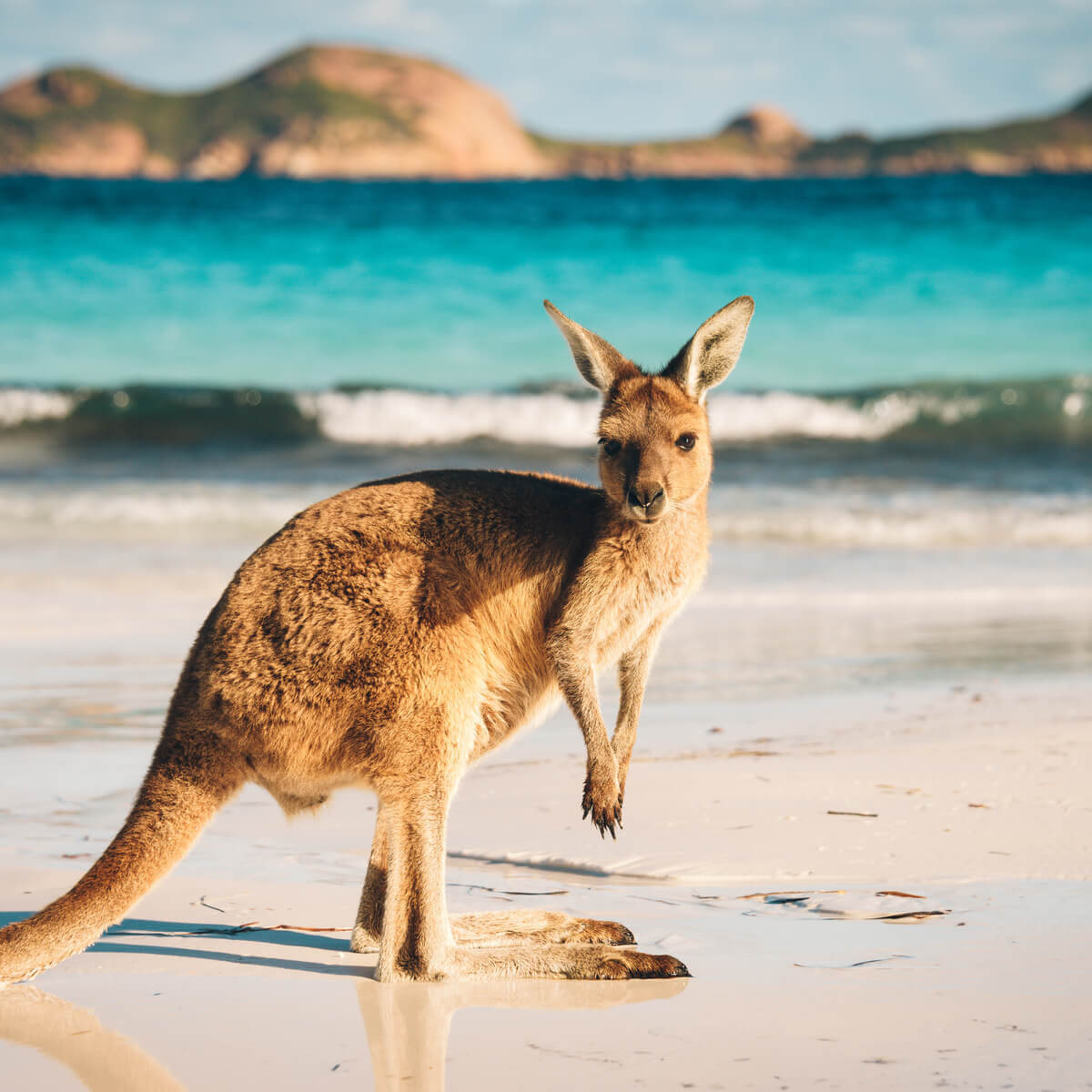 Australia - Medical Specialists in demand include psychiatrists, general practitioners, emergency physicians